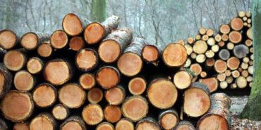 Træsektorens bidrag til samfundsøkonomien