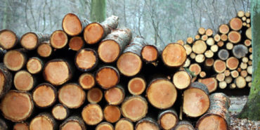 The contribution of the wood industry to the economy